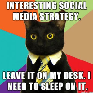 Social Media Strategy Cat | Vulpine Interactive